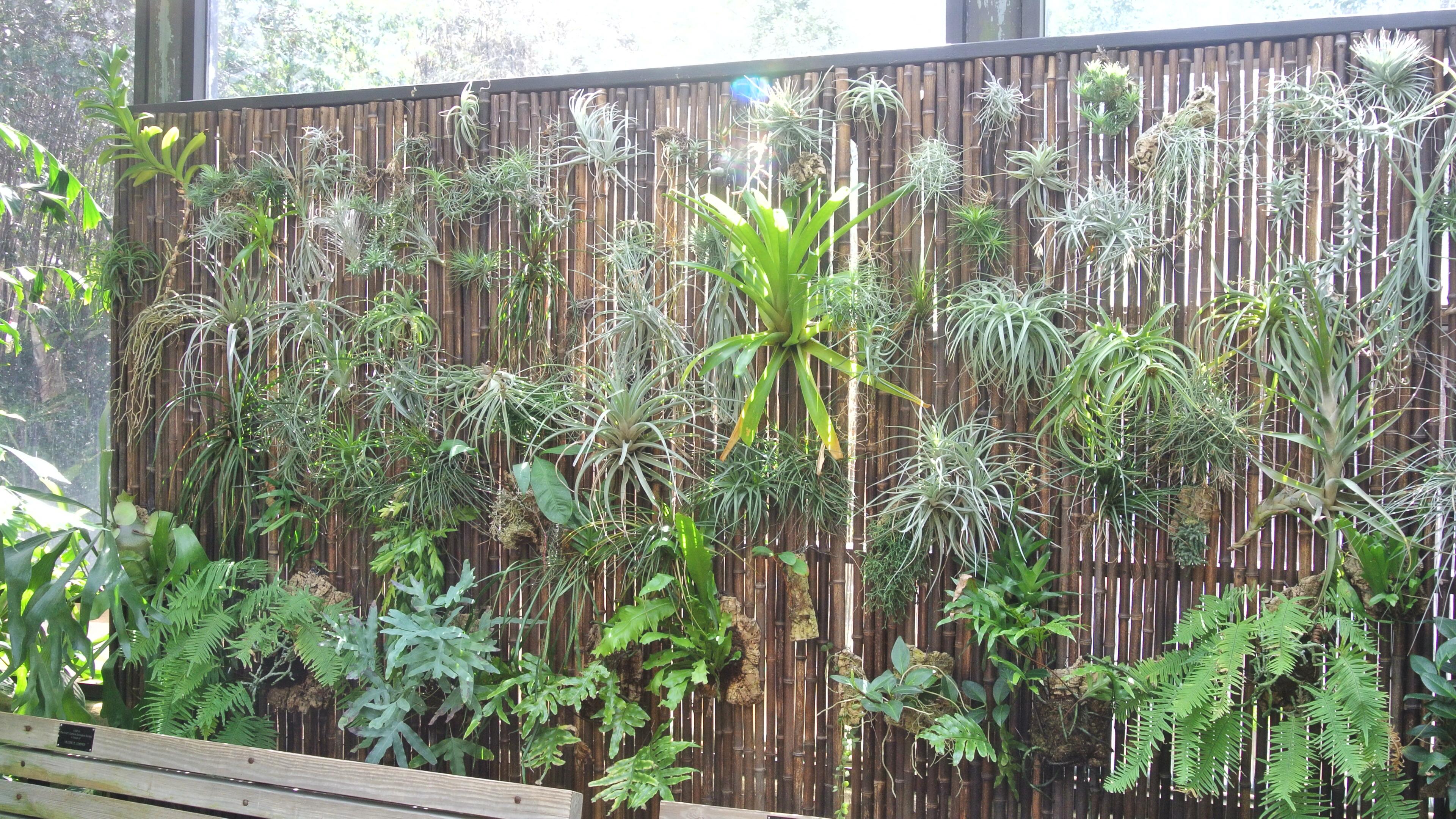 Cheap Wall Murals Thezensucculent
